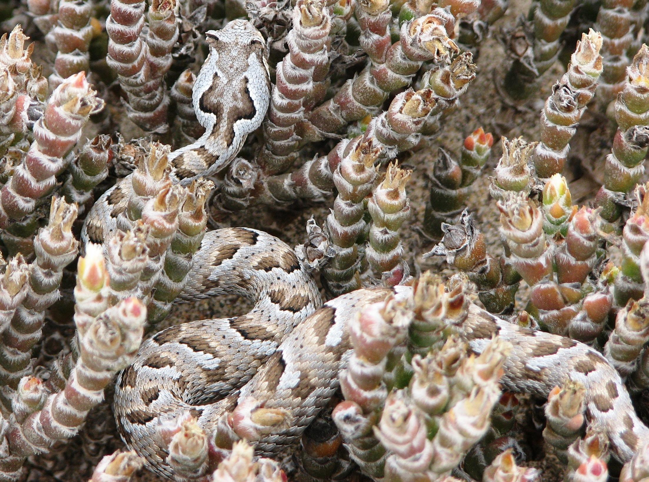 Progress Namibia - Mapping biodiversity in Namibia through Citizen Science