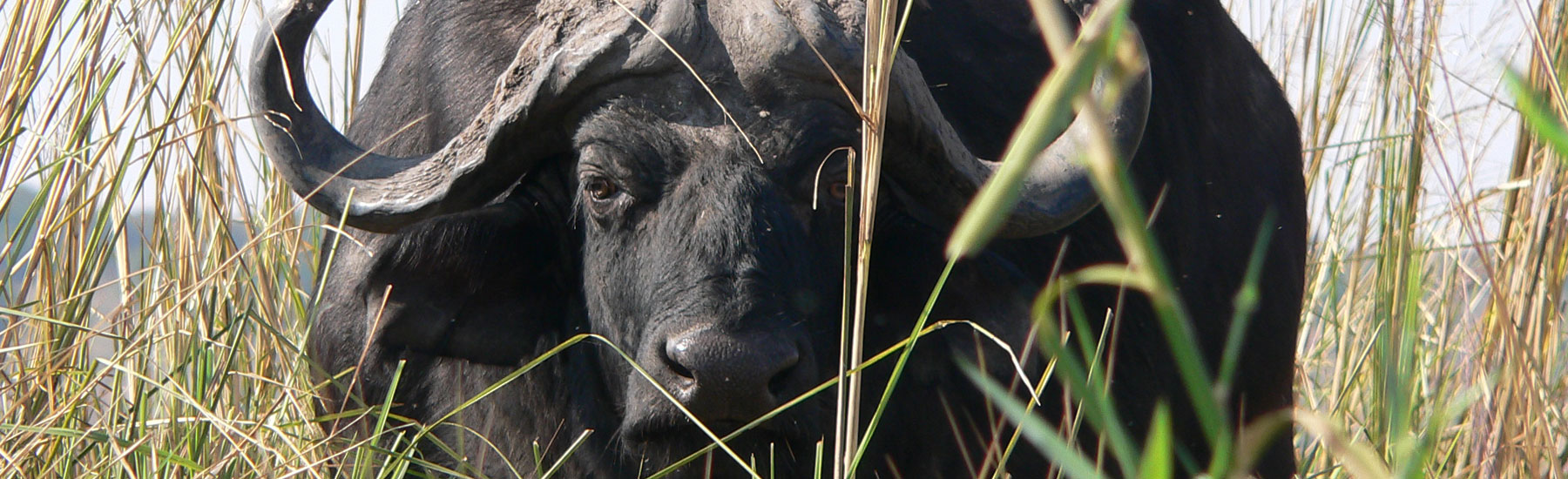 Botswana, Okavango Swamps and Savute Fly-in Safari