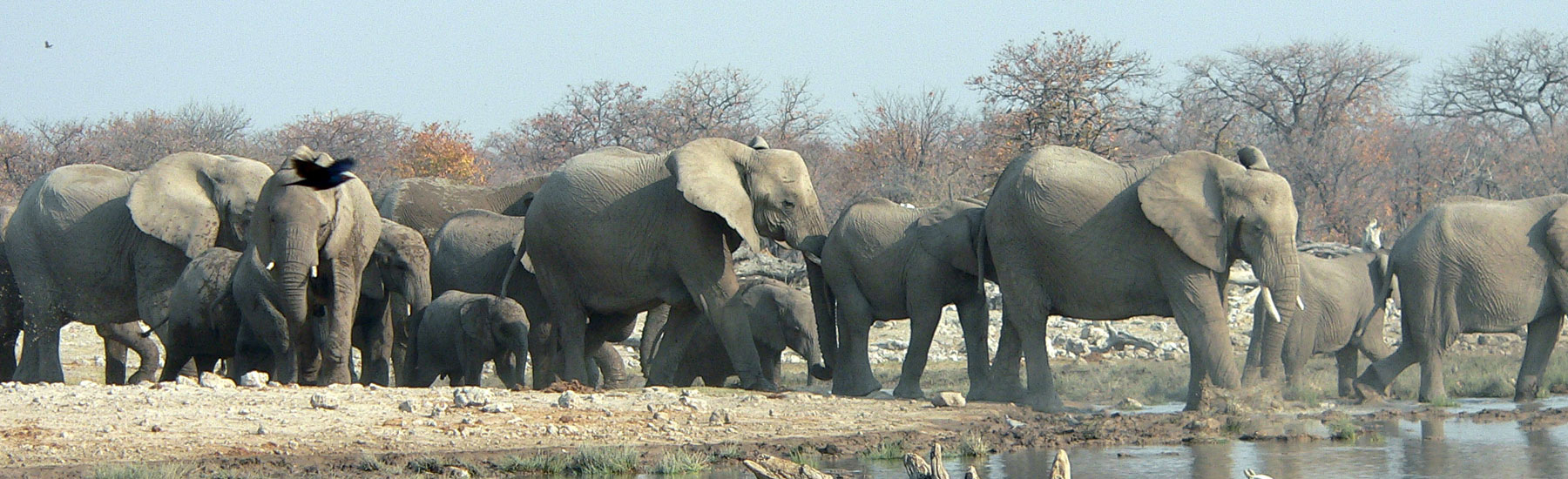 Desert Elephant, Wildlife and Big Cats Fly-in Safari